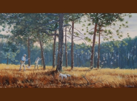 Pine Woods Covey